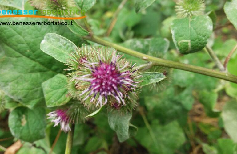 Bardana: la pianta utile alla bellezza e al benessere della pelle