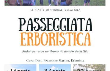 Le piante officinali della Sila, gli usi e la natura incontaminata in Calabria